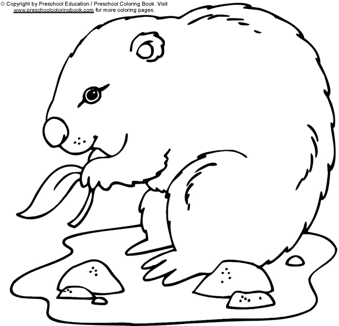 www preschoolcoloringbook com groundhog day coloring page