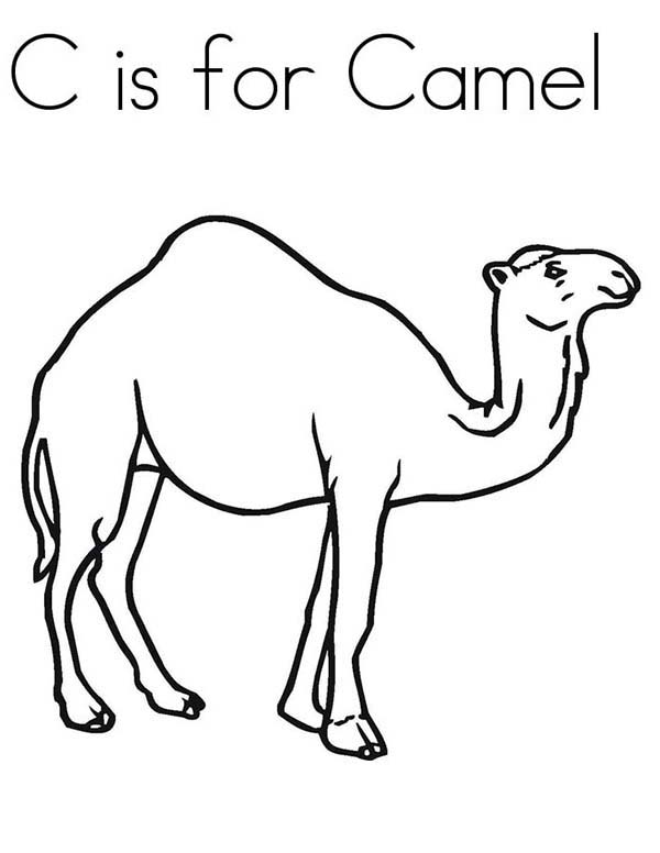 camel coloring pages for students preschool crafts