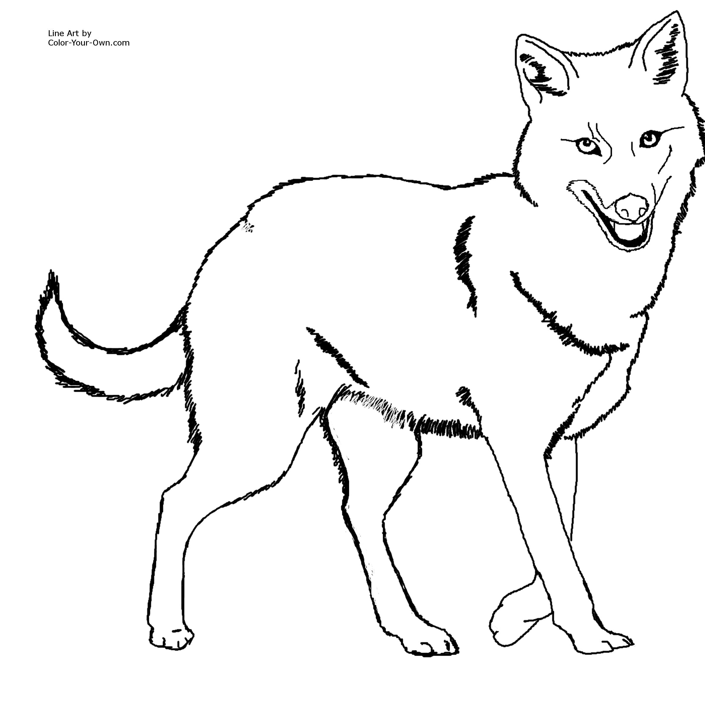 Indian Jackal Coloring Pages