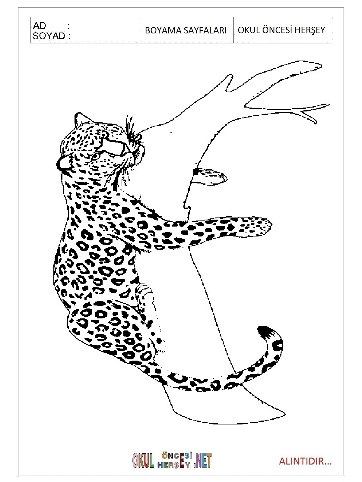 Jaguar Coloring Pages For Preschool