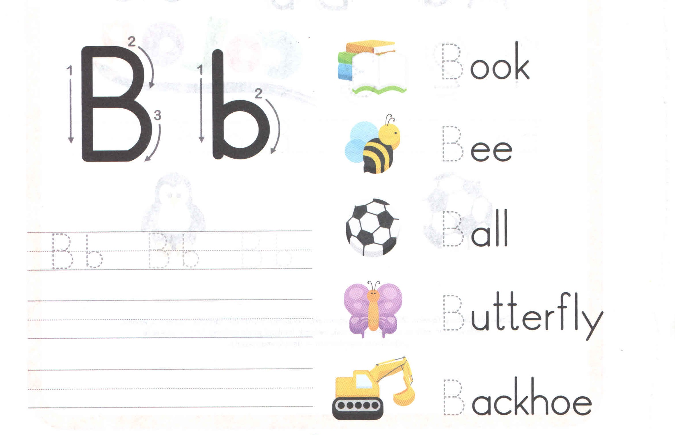 Alphabet Capital And Small Letter B B Worksheet For Kids