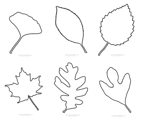 graphic regarding Leaf Cutout Printable identify Tumble Leaf Preschool Printables - Preschool Mother