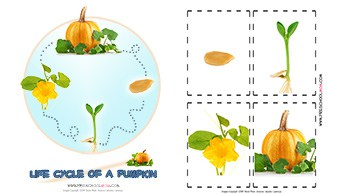 image regarding Life Cycle of a Pumpkin Printable identified as Pumpkin Preschool Printables - Preschool Mother