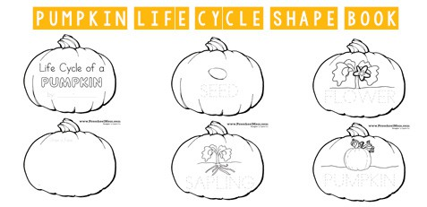 picture regarding Life Cycle of a Pumpkin Printable called Pumpkin Preschool Printables - Preschool Mother