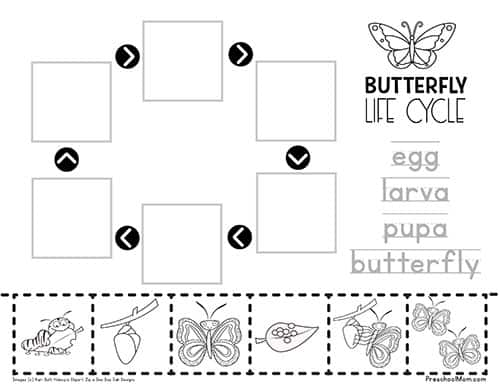 ButterflyLifeCycleWorksheet