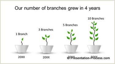 tree growth timeline