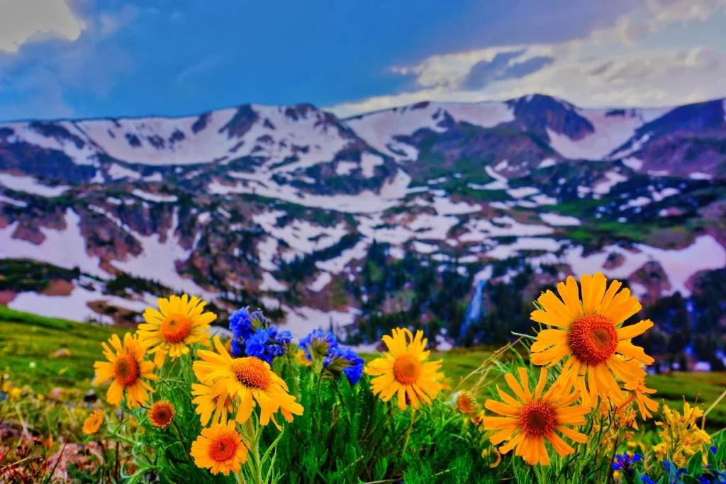 Wildflowers & Wildlife 01