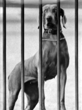 heidi-eisenhower-dog