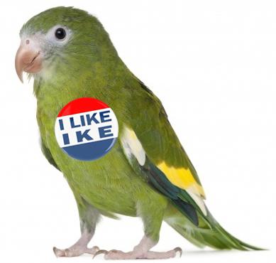 Gabby, Eisenhower's Parakeet