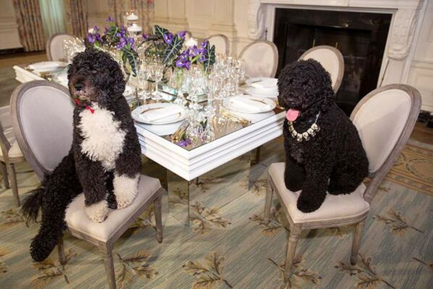Obama's Dogs, Bo and Sunny, Saved From Kidnapper