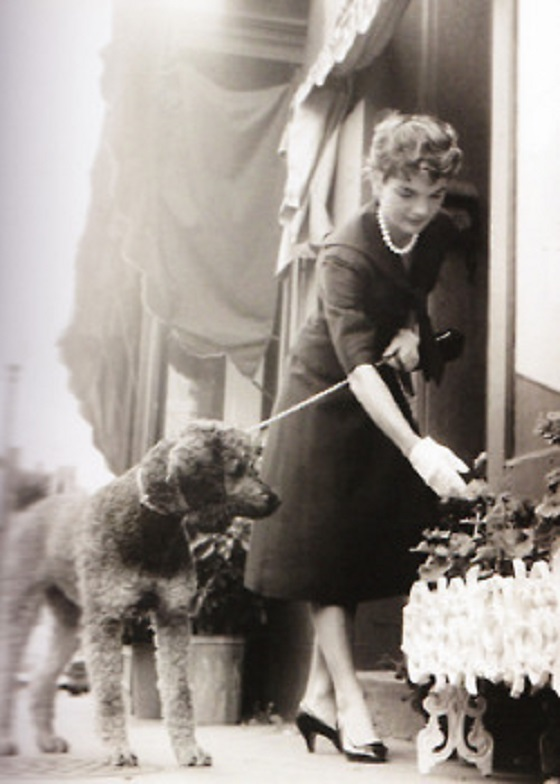 JFK's French Poodle, Gaullie