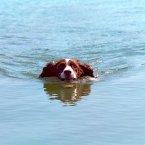President George W. Bush's Dog, Spot