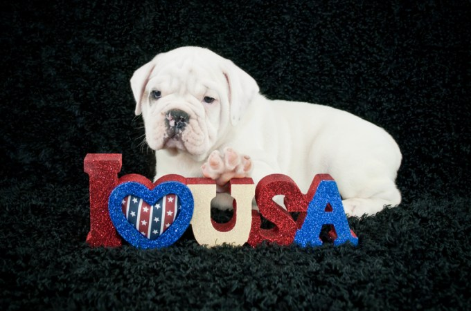 Presidential Pet Trivia – Week of May 4, 2020