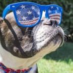 Presidential Pet Trivia – Week of July 5, 2021