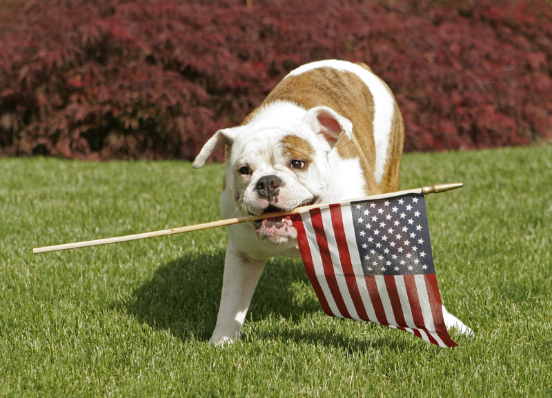 Presidential Pet Trivia – Week of October 22, 2018
