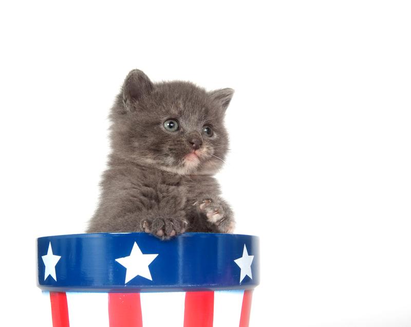 Presidential Pet Trivia – Week of August 13, 2018