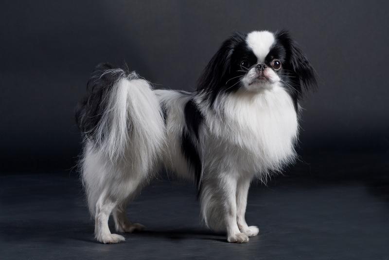 Franklin Pierce's Seven Small Dogs