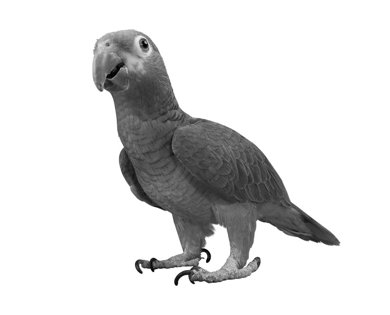 George Washington's Parrot