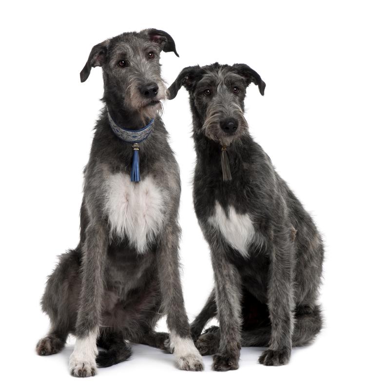 John Tyler's  Wolfhounds