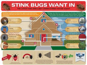 stink bugs want in Bedbugs Presidio Pest Management