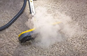steam kill bed bugs Bedbugs Presidio Pest Management