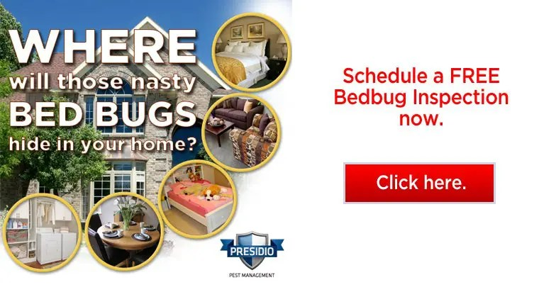 free home bed bug inspections cta