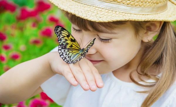 Presidio Pest Management butterflies