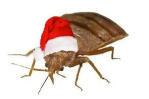 Bed Bug Holidays Presidio Pest Management