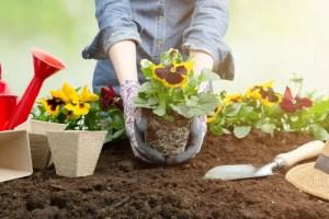 Garden Pests - Presidio Pest Management