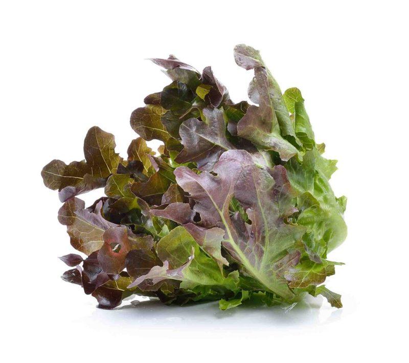 เรดโอ๊ค (Red Oak Lettuce)