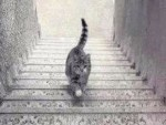 Is the cat coming up or down the staircase?