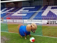Caley Thistle's European mascot Neigh-Mar