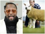 The sheep named after the American star has fetched over £70,000