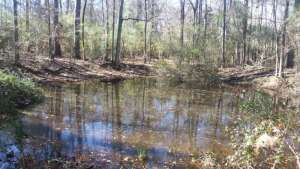 View of the Pond along the Trail at Mary Ann Brown Preserve Hiking Trail