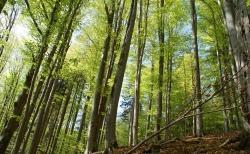 Frühling pur: Der Mai mit seinem frischen Waldgrün gehört zu den schönsten Zeiten im Nationalpark. Zahlreiche Veranstaltungen laden dazu ein, diese Zeit besonders zu genießen. (Foto: NPV Bayerischer Wald)