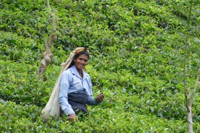 Kulturtrip Sri Lanka Zwischen Dschungel, Savanne und mystischen Berglandschaften