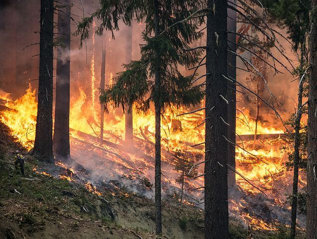 Waldbrand in Portugal – Zahl der Toten steigt auf 39