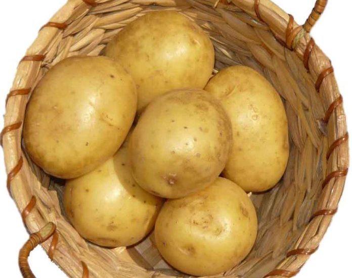 Kartoffel,Gesundheit,Essen/Trinken,Berlin,Kartoffel-Apotheke