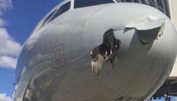 Mexiko,Miami,Luftverkehr,Tier,Vogel,News