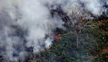 Brasilien, Presse,News,Medien,Aktuelle, Nachrichten,Amazonas