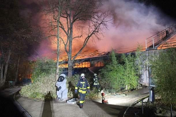 Menschenaffen,Feuer,Zoo,Krefeld, Presse,News,Medien