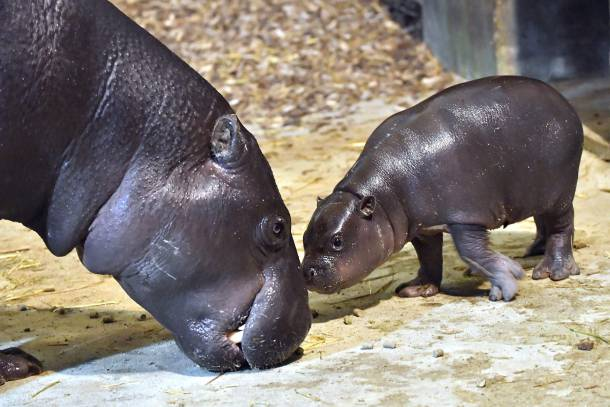 Zoo Rostock,Rostock,Zoo,Presse,News,Medien,Bericht,Tiere