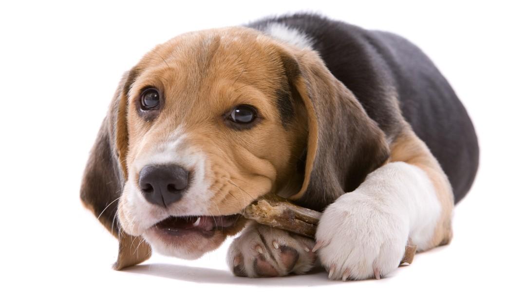 børn må ikke forstyrre hunden, mens den spiser