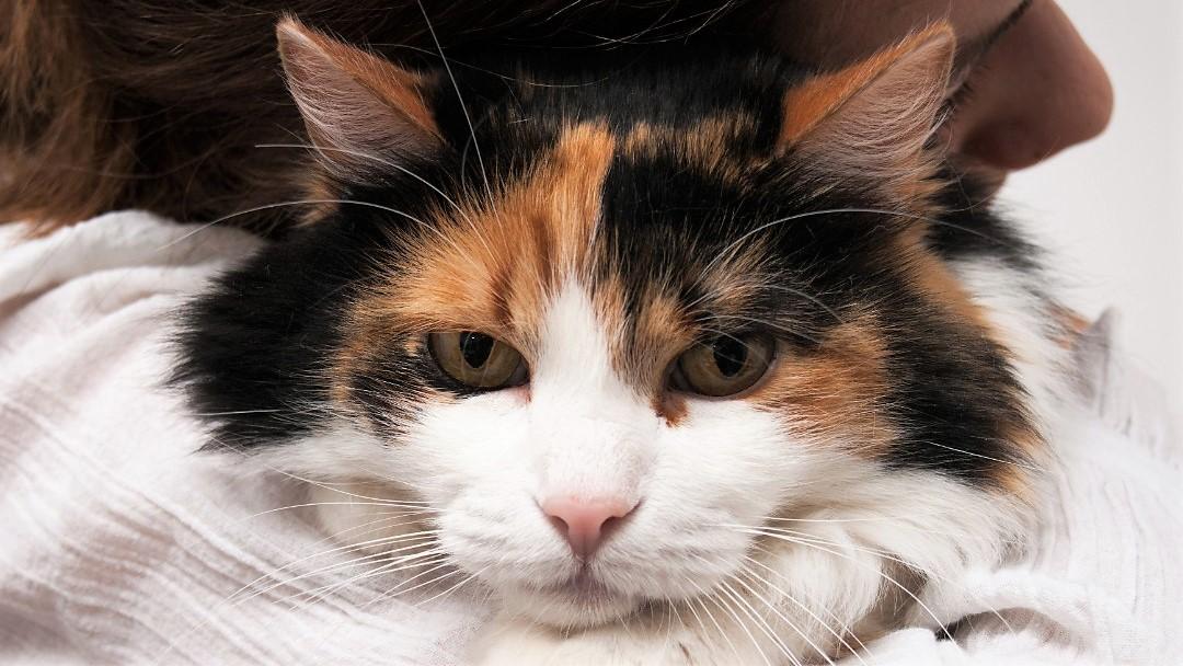 Katte prøver at skjule deres smerter