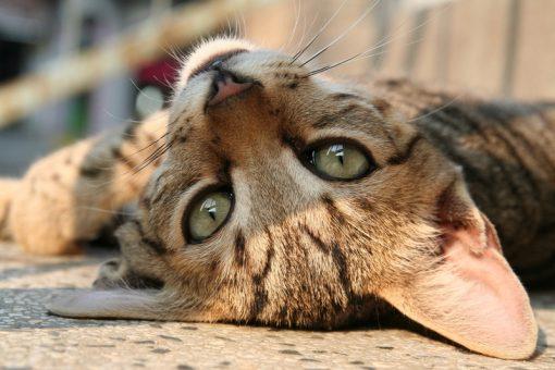 Katte må helst ikke koste noget