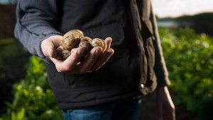 Wissen wo die Nahrungsmittel Lebensmittel herkommen im Hofladen
