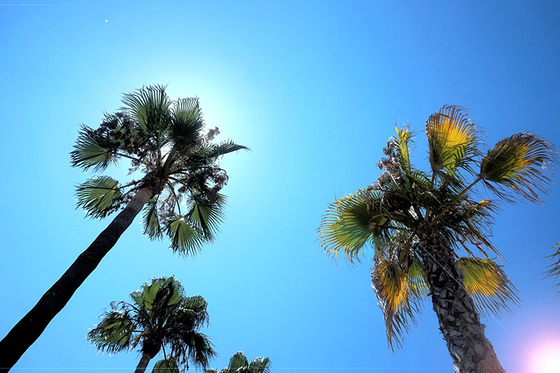 Mallorca Wohnmobil Palmen