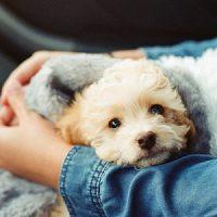 Haustier Gege Stress