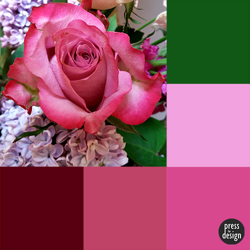 Tuesday Colour Inspiration – birthday rose