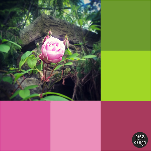 Tuesday Colour Inspiration – Climbing Roses